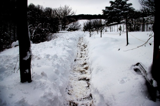 2014_snow2